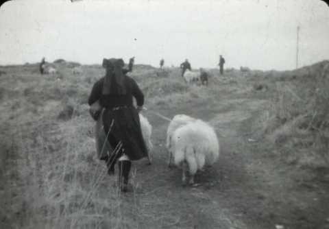 Foire aux moutons à Ouessant | Jean-Pierre Gestin