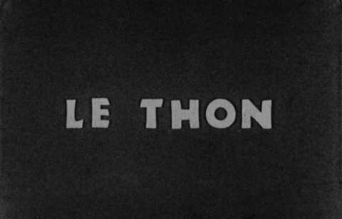 Thon (Le) | Max Scholl
